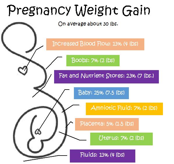 pregnancy weight gain chart