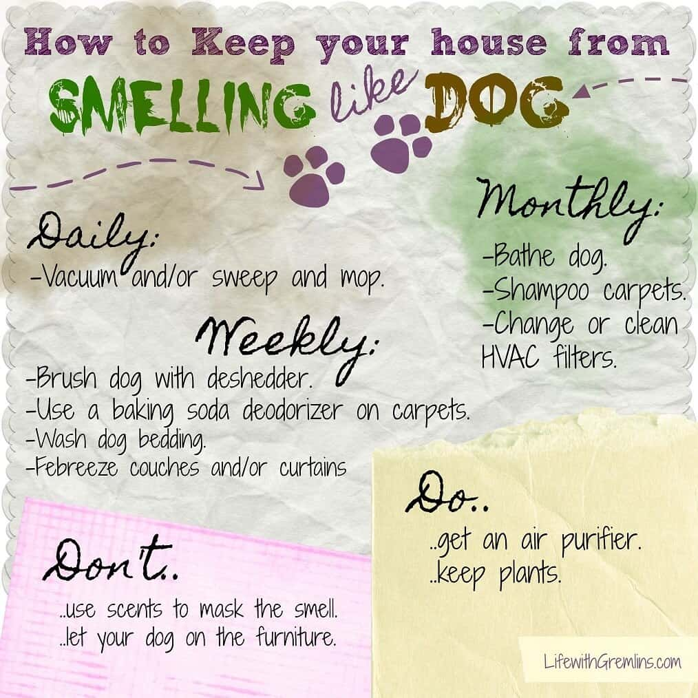 dog smell house checklist