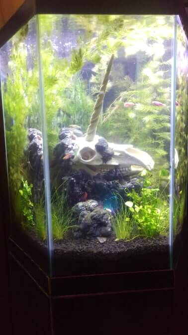 DIY foam fish tank background unicorn planted tank